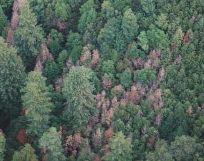 Marin County, 2000