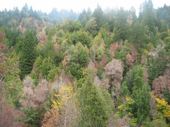 Humboldt County, 2006