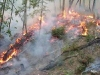 Testing prescribed fire for control 2