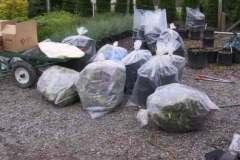 Destruction of infected plants