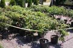Isolation of plant block