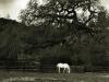 Horse & Oak