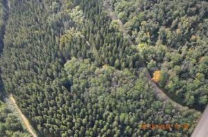 Ongoing death and dieback in 2014 adjacent to an infected larch stand felled in 2010 from southwest England. Photo by England Forestry Commission.